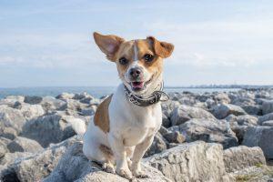 dogs-training